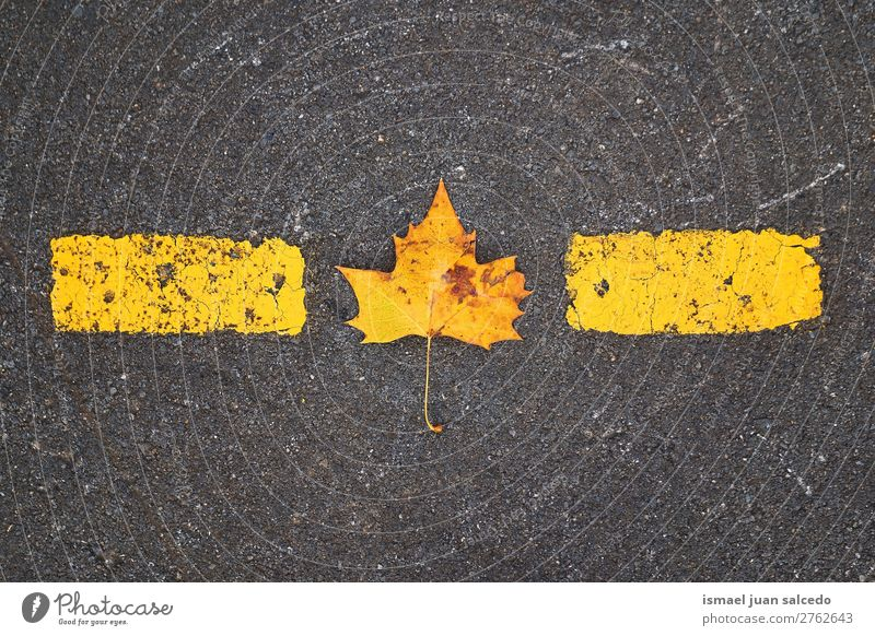 yellow leaf on the ground Leaf Yellow Nature Abstract Consistency Exterior shot background Beauty Photography fragility Autumn fall Winter