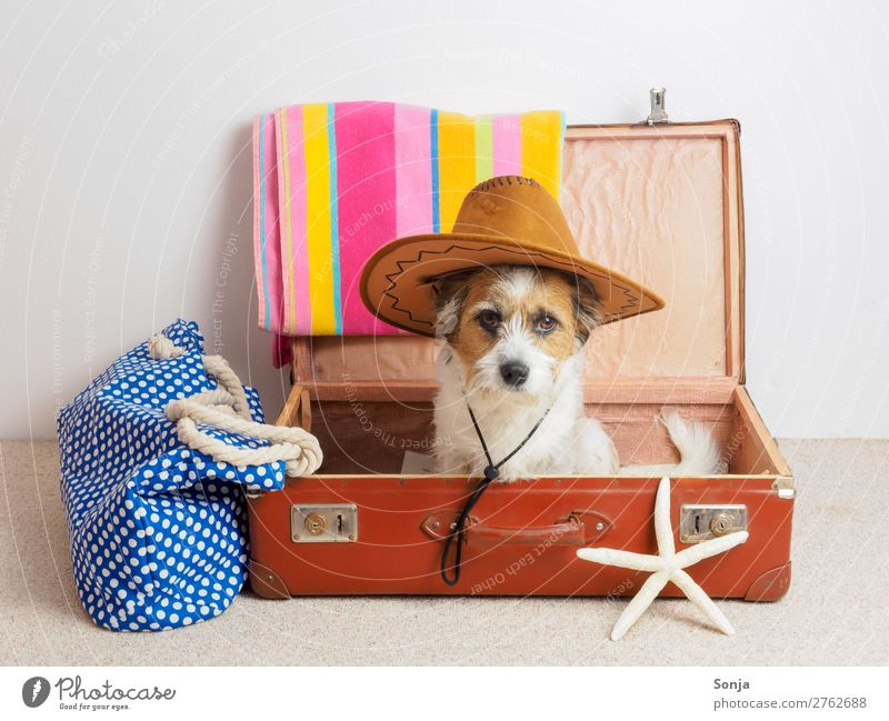 Dog with sun hat in a suitcase Vacation & Travel Far-off places Summer vacation Animal Pet 1 Suitcase Sunhat Starfish Beach bag Bath towel Looking Sit