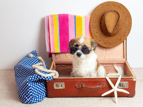 Dog with sunglasses in a suitcase Lifestyle Leisure and hobbies Vacation & Travel Tourism Far-off places Summer Summer vacation Sun Beach Ocean Bag Suitcase