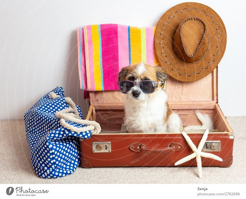 Vacation & Travel Dog Summer Sun Ocean Animal Joy Far-off places Beach Lifestyle Funny Tourism Leisure and hobbies Sit Happiness Summer vacation