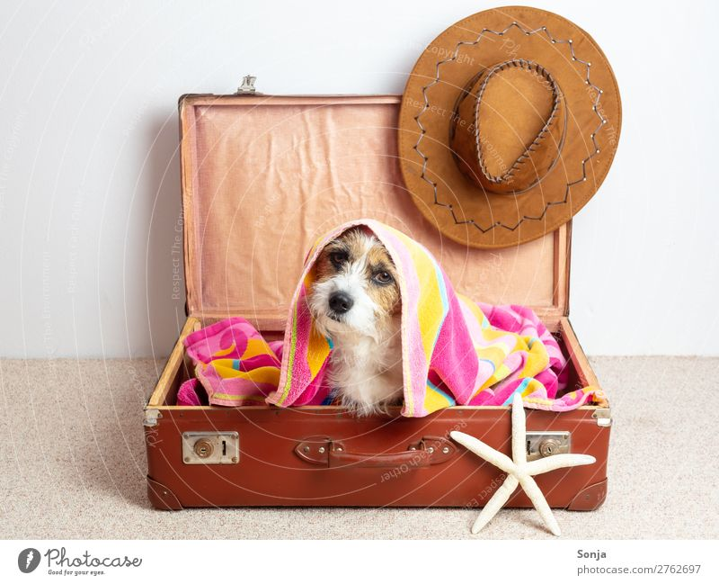 Vacation & Travel Dog Summer Relaxation Animal Joy Lifestyle Funny Tourism Sit Adventure Cool (slang) Summer vacation Serene Pet Hip & trendy