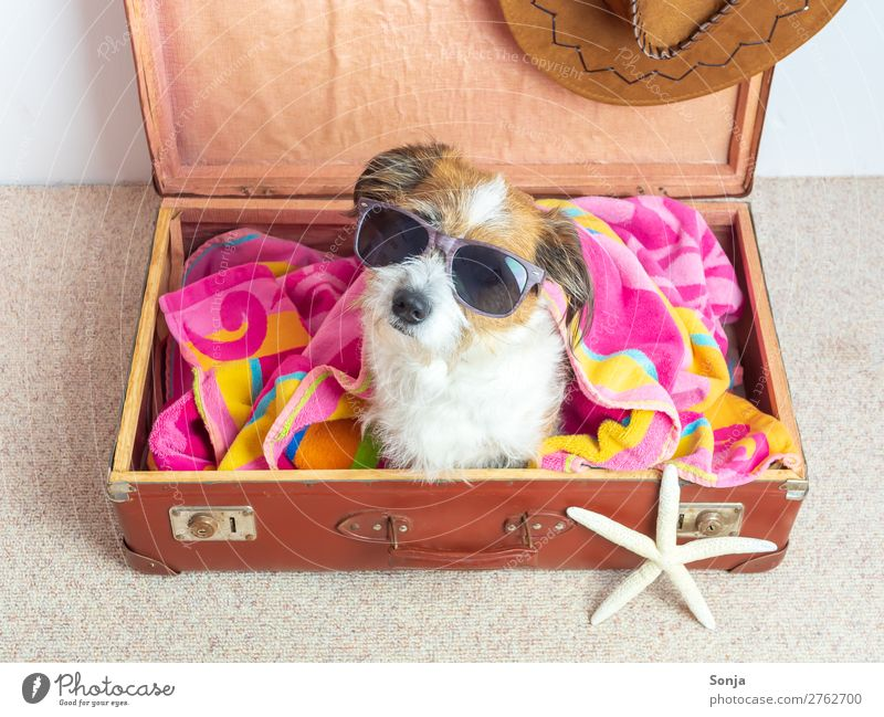 Dog with sunglasses in a suitcase Vacation & Travel Far-off places Summer vacation Animal Pet 1 Sunglasses Suitcase Bath towel Sunhat Sit Hip & trendy Maritime