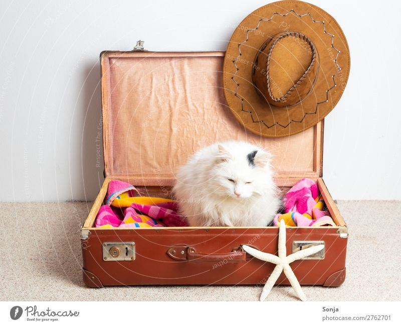 Cat Vacation & Travel Beautiful Animal Far-off places Funny Tourism Sit Summer vacation Pet Suitcase Anticipation Maritime Brash Love of animals Rudbeckia