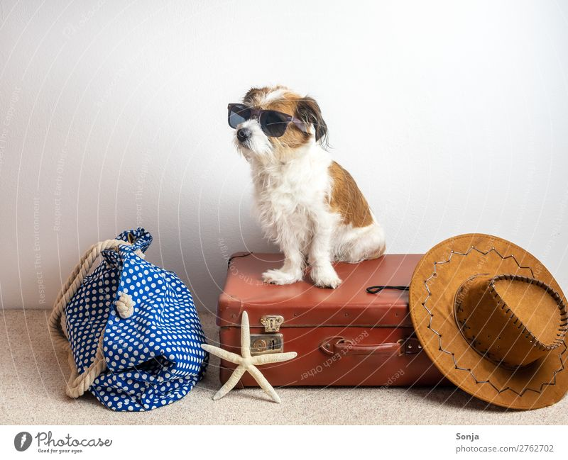 Dog on a suitcase Lifestyle Vacation & Travel Far-off places Summer vacation Hat Animal Pet 1 Suitcase Starfish Rudbeckia Beach bag Sit Maritime Anticipation