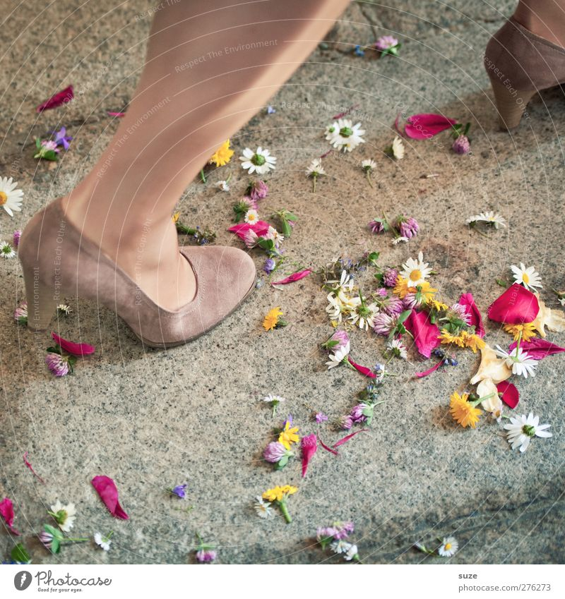 Blossom Legs Feet Feasts & Celebrations Footwear Walking Wedding Decoration Ground Floor covering Romance Symbols and metaphors Kitsch Tradition Blossom leave