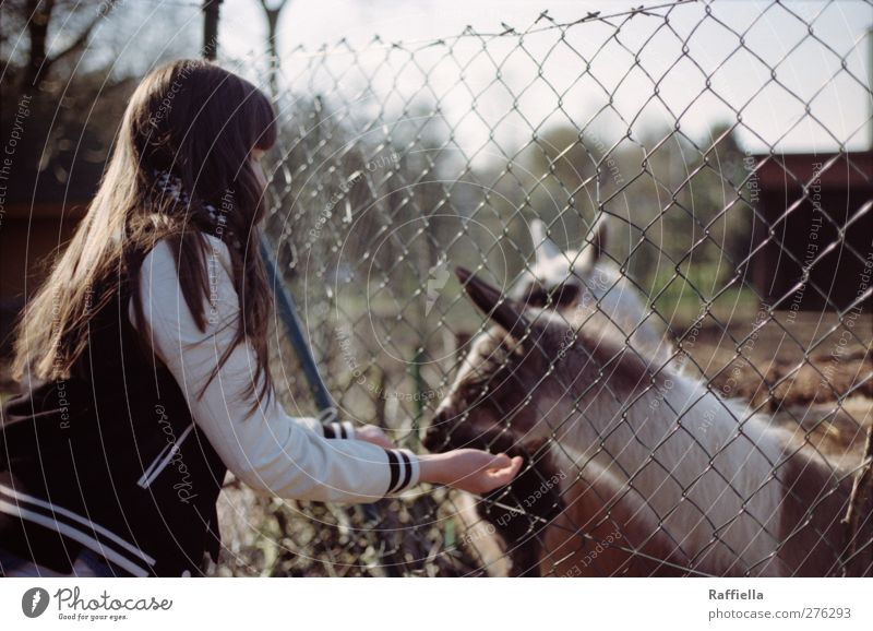Human being Youth (Young adults) Hand Animal Adults Feminine Young woman Hair and hairstyles Body 18 - 30 years Wild animal Arm Group of animals Pelt To enjoy