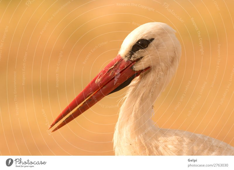 Portrait of a elegant stork Elegant Beautiful Freedom Couple Adults Nature Animal Wind Flower Grass Bird Flying Long Wild Blue Green Red Black White Colour