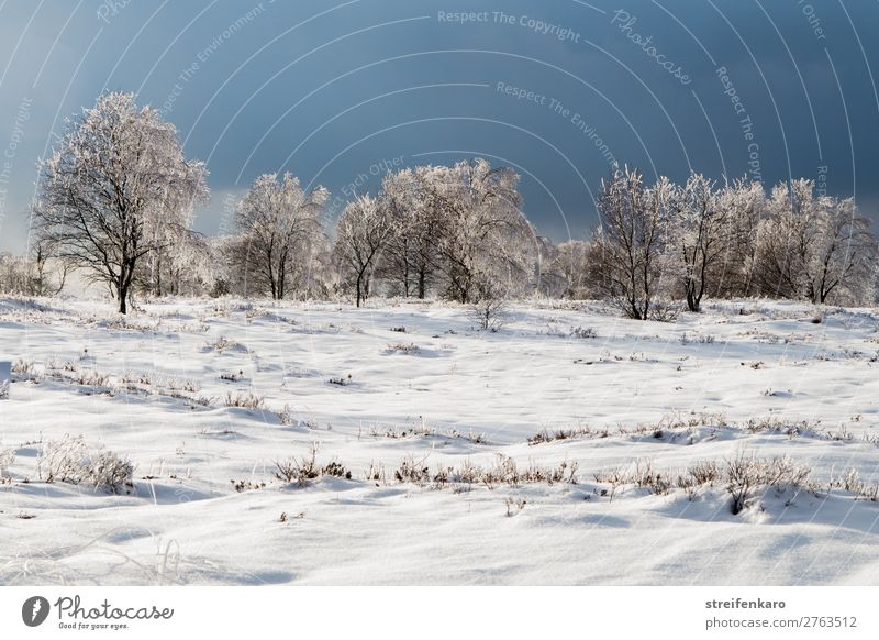 Nature Plant Blue White Landscape Tree Clouds Calm Winter Far-off places Dark Environment Cold Snow Grass Ice