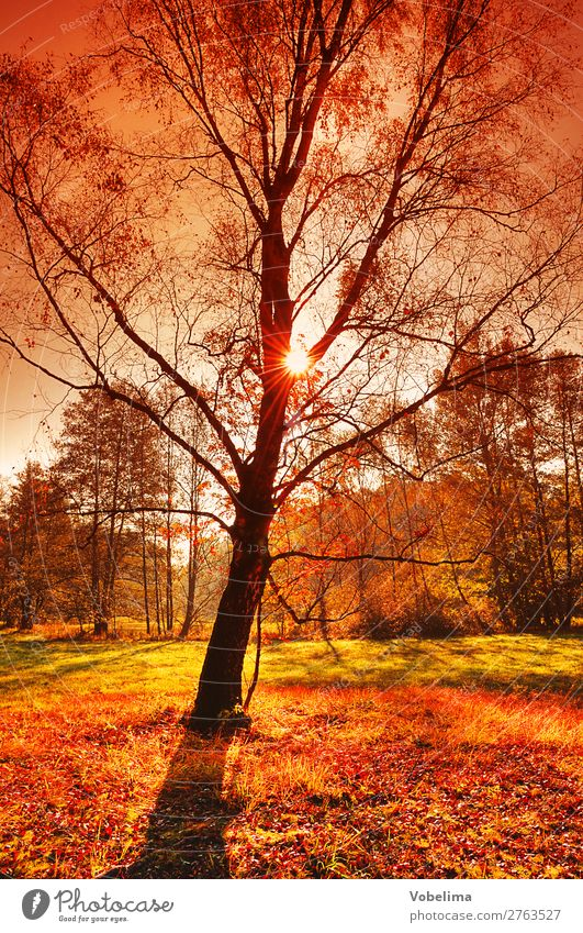 Sun in the autumn forest Nature Autumn Beautiful weather Tree Forest Brown Multicoloured Yellow Gold Green Orange Red Black Automn wood sunny Colour photo