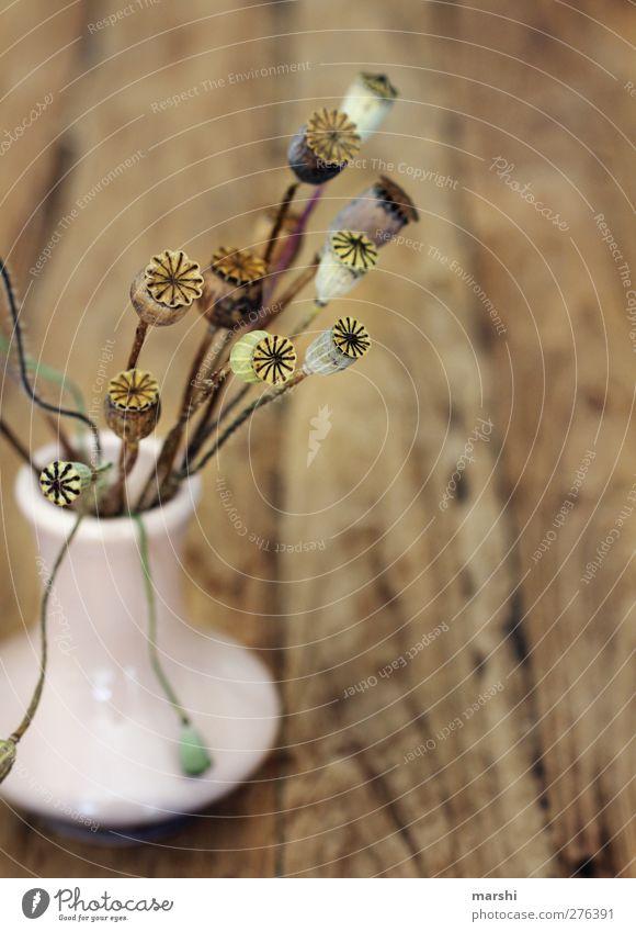 Plant Wood Small Brown Decoration Poppy Vase Poppy blossom Woody Poppy capsule