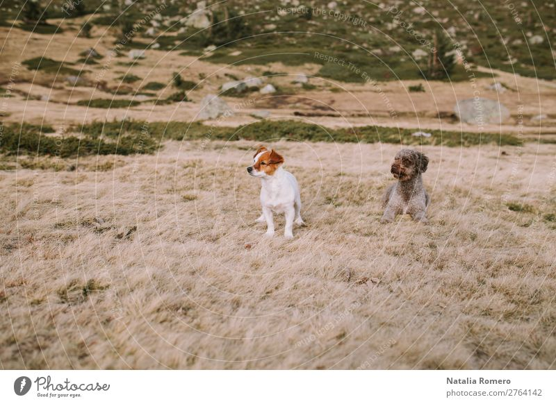 two puppies are in the meadow lying down to continue playing Happy Beautiful Playing Group Nature Animal Grass Park Meadow Lake Fur coat Pet Dog Sit Natural