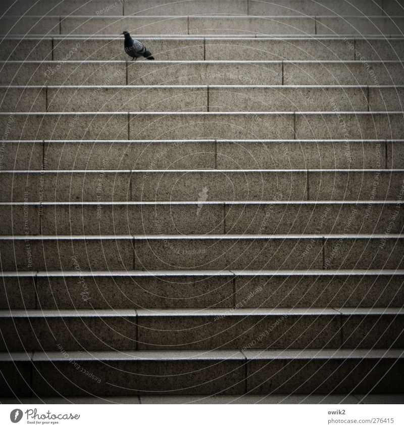 Train missed Stairs Train station Animal Bird Pigeon 1 Stone Stand Sadness Wait Loneliness Colour photo Subdued colour Exterior shot Pattern Deserted