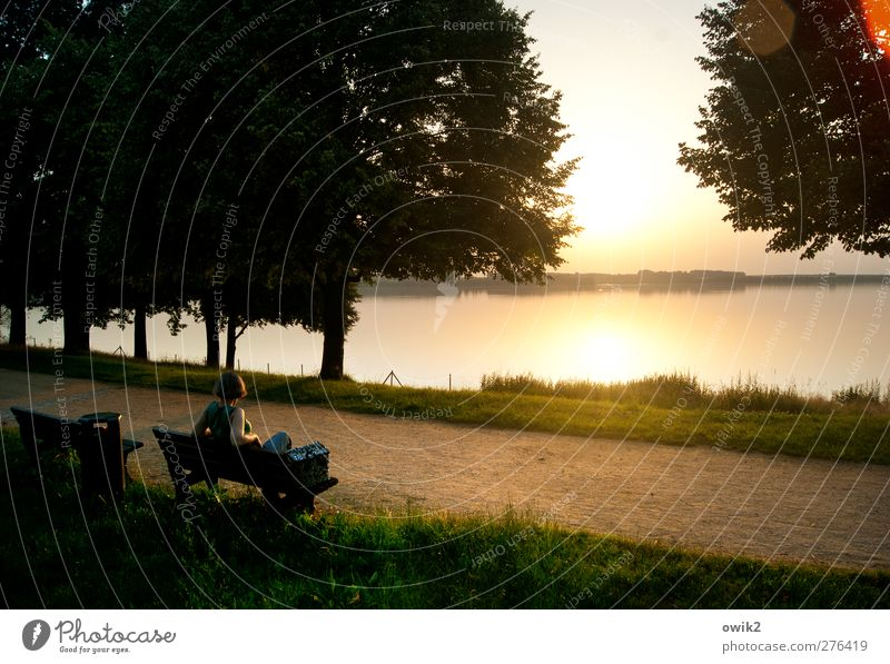 evening show Woman Adults 1 Human being Environment Nature Landscape Plant Water Sky Horizon Climate Weather Beautiful weather Tree Grass Lakeside Observe