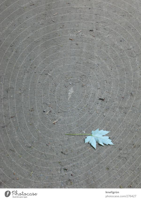 beginning of autumn Nature Plant Elements Earth Leaf Lie Faded Natural Dry Gray Green Emotions Sadness Loneliness End Transience Change Bright green Ground
