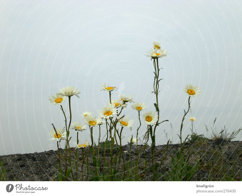 Sky Nature Blue White Green Beautiful Summer Plant Flower Landscape Yellow Environment Emotions Brown Earth Natural