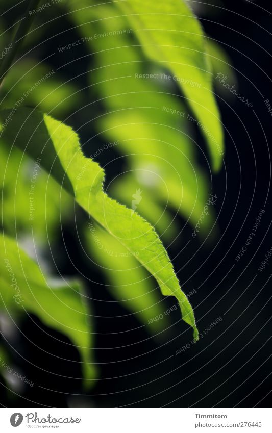 Nature Green Plant Leaf Black Environment Emotions Garden Contentment Esthetic Simple Buddleja