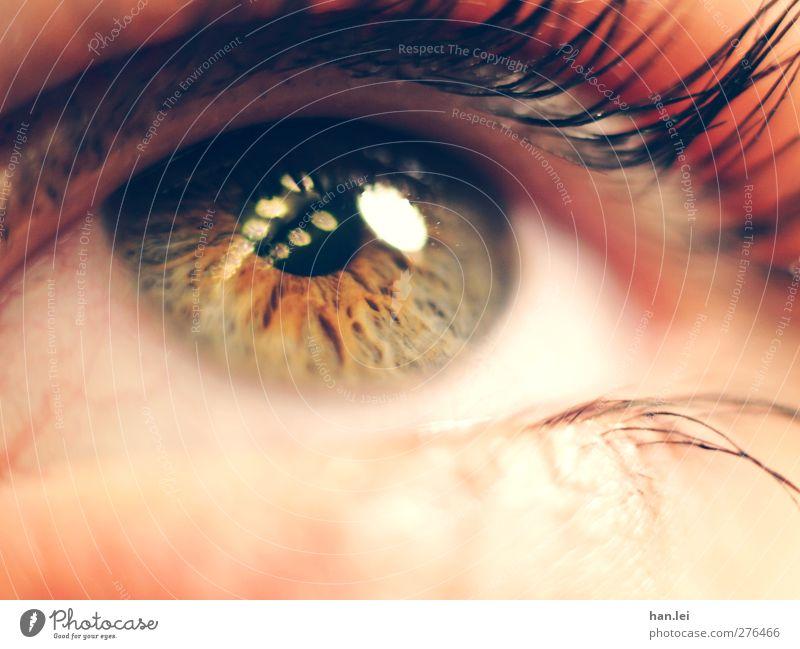 eye Beautiful Skin Face Make-up Mascara Feminine Body Eyes 1 Human being Observe Think Looking Threat Authentic Orange Pink Trust Compassion Longing Bizarre