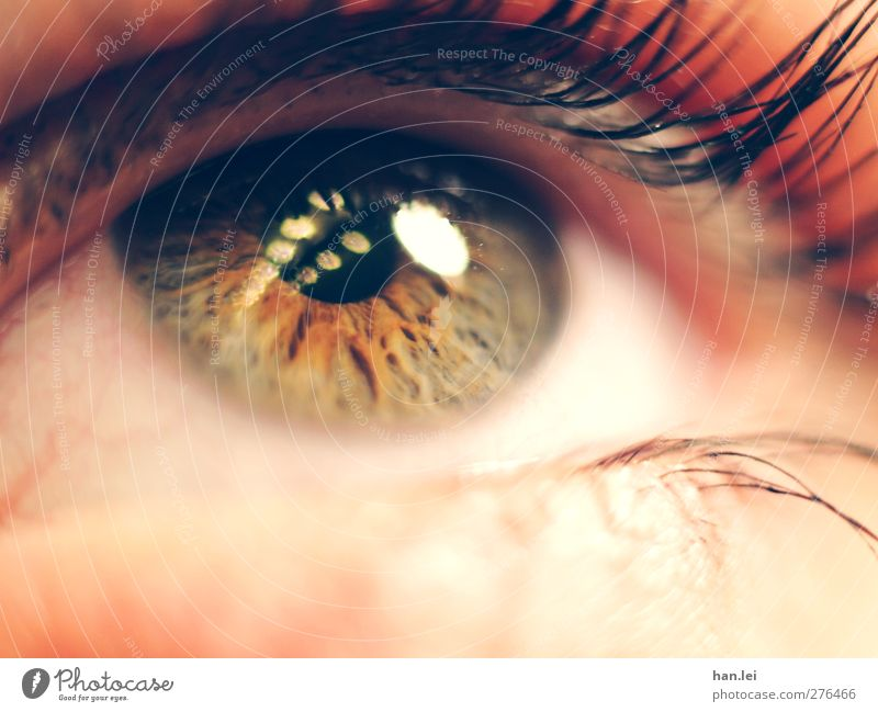 Human being Beautiful Face Eyes Feminine Think Orange Body Pink Skin Authentic Observe Threat Trust Longing Make-up