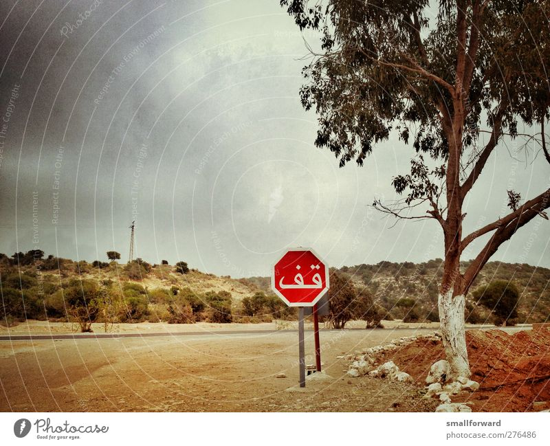 STOP! Adventure Summer Earth Sand Storm clouds Warmth Tree Sign Signs and labeling Signage Warning sign Road sign Hot Truth Authentic Modest Colour photo