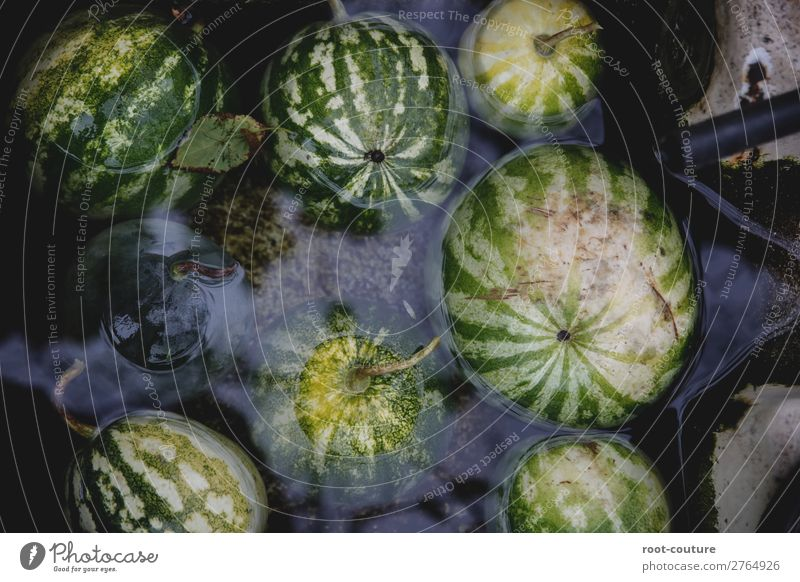 Chilled Organic Watermelons Fruit Dessert Candy Nutrition Organic produce Vegetarian diet Diet Healthy Eating Summer Nature Plant Fresh Sweet Minerals Snack