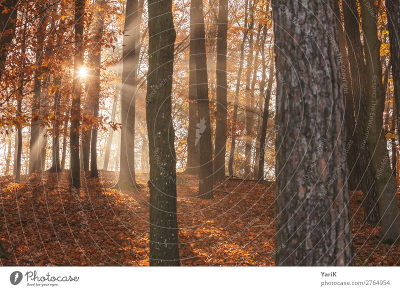 Autumnal_T Nature Landscape Sunlight Beautiful weather Tree Forest Warmth Lighting Bavaria Hiking To go for a walk Exterior shot Branch Twigs and branches Leaf