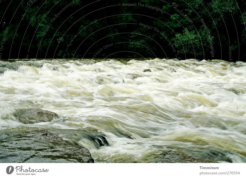 Nature Water Vacation & Travel White Green Plant Black Environment Emotions Movement Stone Natural Speed Fresh River Flow