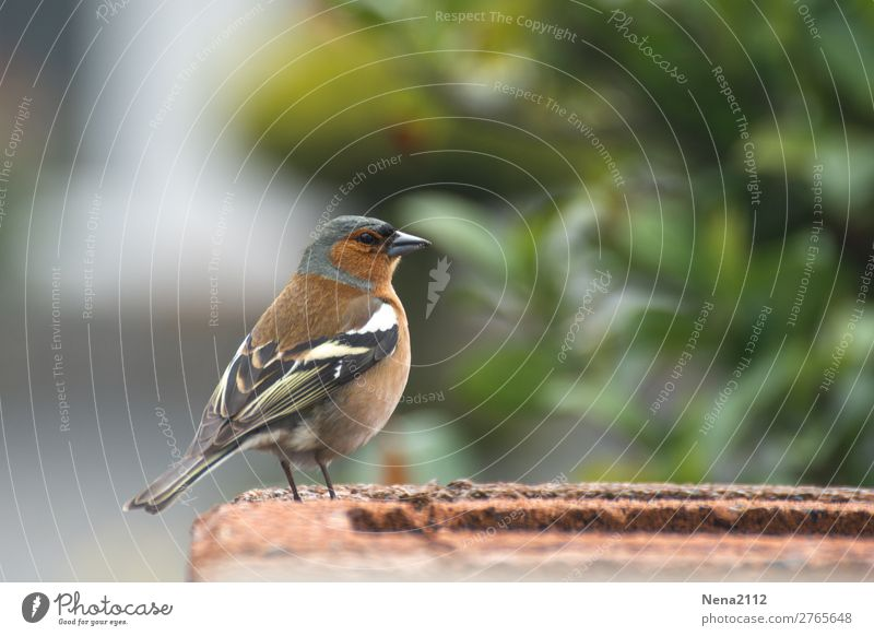 Nature Animal Environment Small Garden Freedom Bird Air Wild animal Wing Nest Sparrow Birdseed Townsfolk