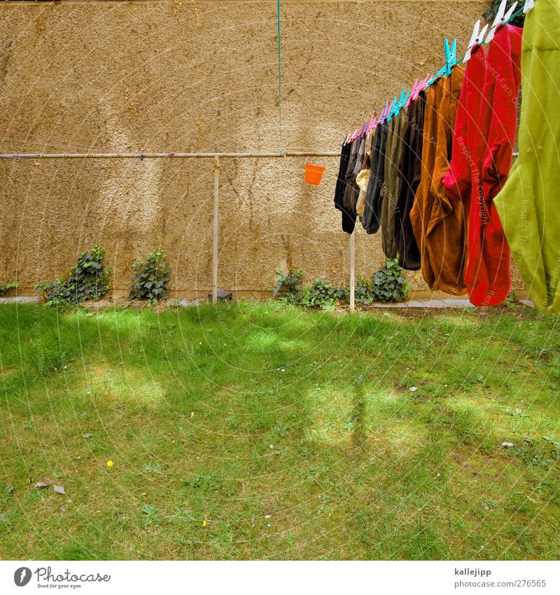 washed Living or residing Flat (apartment) House (Residential Structure) Garden Meadow Fashion Stockings Hang Laundry Clothesline Household Clothes peg Dry