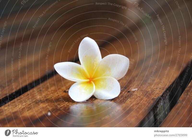 Vacation & Travel Nature Summer Plant Beautiful Water White Calm Wood Yellow Blossom Tourism Brown