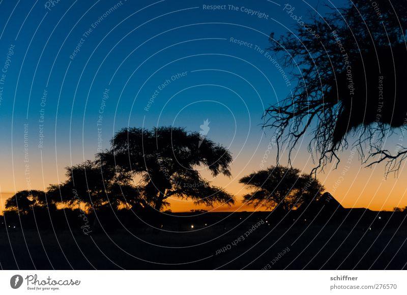Now hurry back before the Jag comes... Environment Nature Landscape Night sky Horizon Sunrise Sunset Beautiful weather Plant Tree Desert Esthetic Kitsch Blue