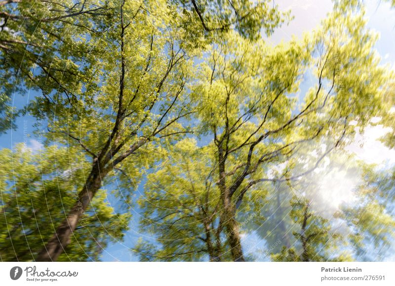 Nature Tree Summer Plant Forest Environment Spring Freedom Air Weather Contentment Beginning Esthetic Elements Beautiful weather Uniqueness