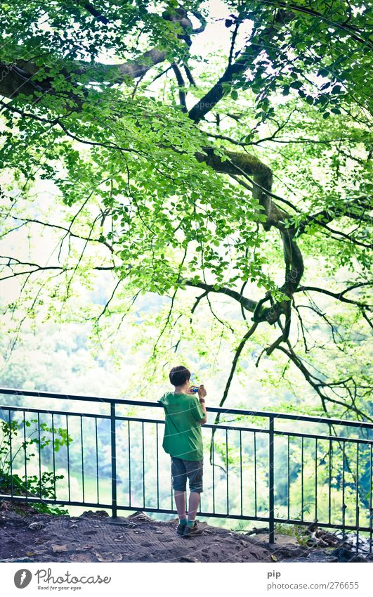 young photographer Human being Masculine Boy (child) Back 1 8 - 13 years Child Infancy Nature Beautiful weather Tree Branch Twigs and branches Leaf Forest Rock