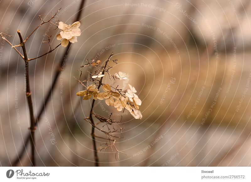 dry leaves, winter Beautiful Winter Garden Nature Plant Spring Tree Flower Leaf Blossom Park Street Cute Dry Blue Brown Pink White Serene Calm Death Emotions