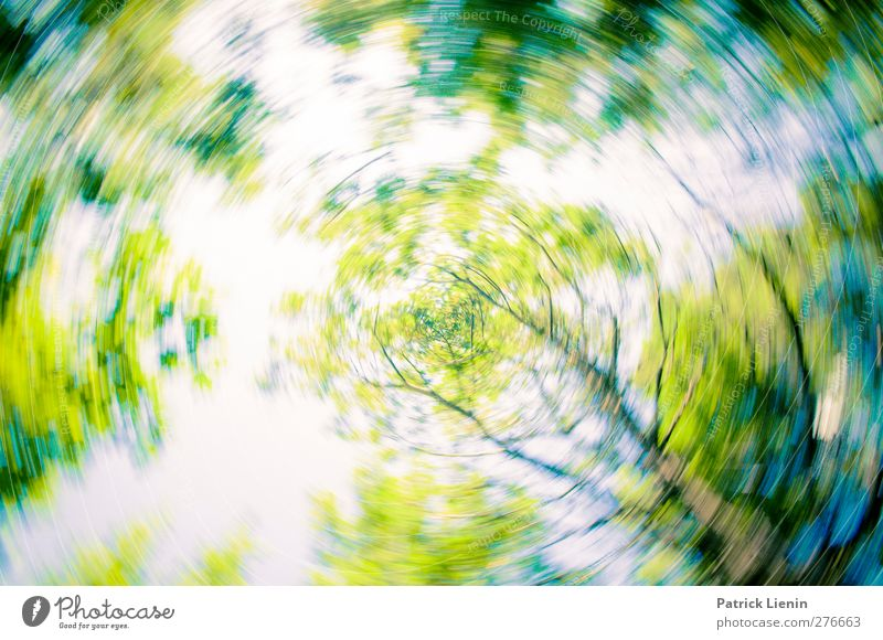Nature Green Plant Loneliness Forest Landscape Environment Air Art Moody Weather Wind Leisure and hobbies Beginning Elements Creativity