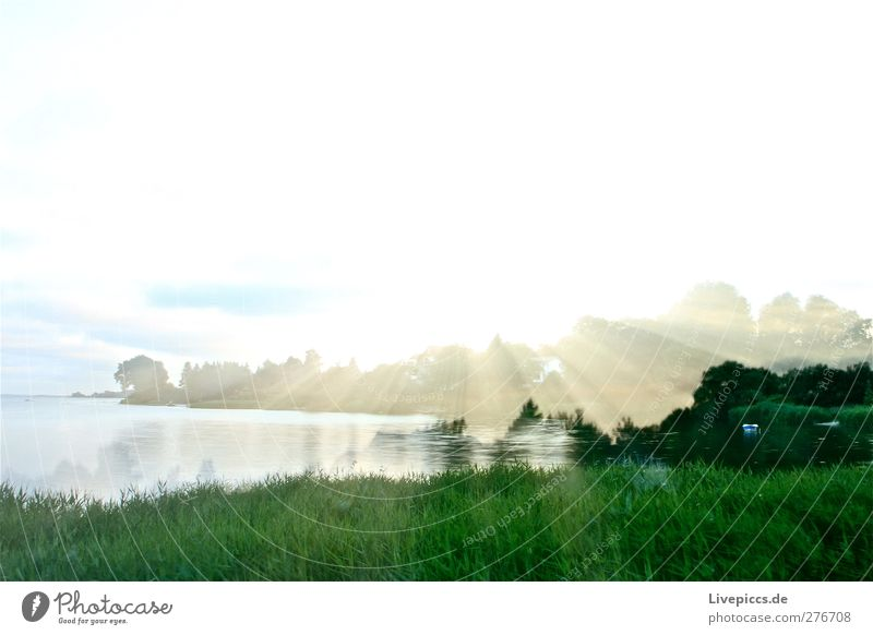 Sunlight in Lauterbach Environment Nature Landscape Water Sky Clouds Sunrise Sunset Summer Weather Beautiful weather Plant Tree Grass Bushes Foliage plant