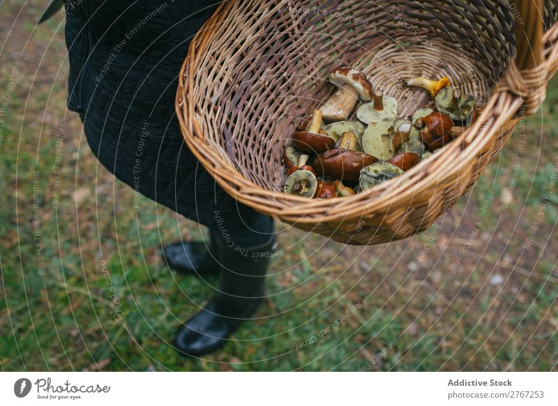 Crop person holding bucket full of mushrooms Basket Mushroom Pick Seasons Forest Natural Summer Healthy Fresh Food Autumn wicker Nature Brown Organic Wild