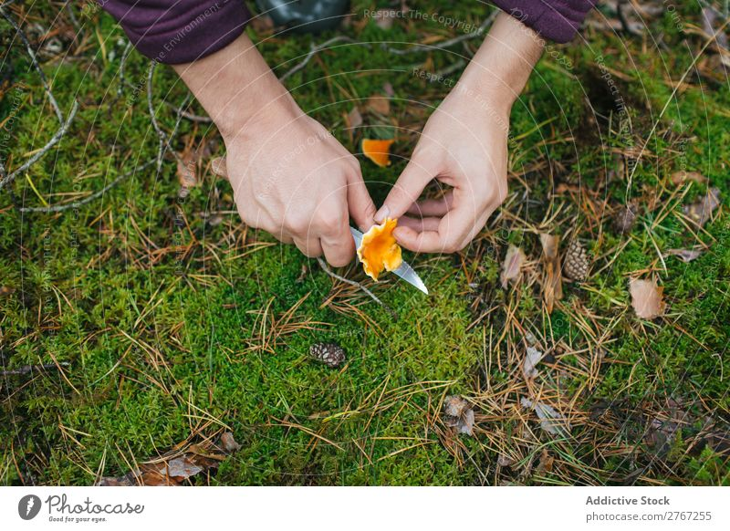Crop woman cutting off mushroom Woman Mushroom Knives Cut Tourism Natural Environment Seasons