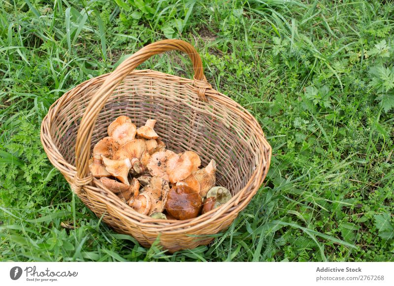 Wicker basket full of different mushrooms Basket Mushroom Pick Seasons assortment Forest Harvest Natural Edible Summer Healthy Fresh Food Autumn wicker Nature