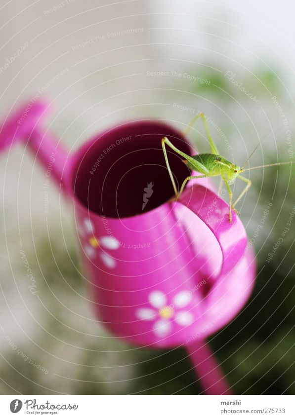 new roommate Animal 1 Green Pink Locust Small Smooth Watering can Interior shot Feeler Insect Disgust Decoration Discover Colour photo Detail
