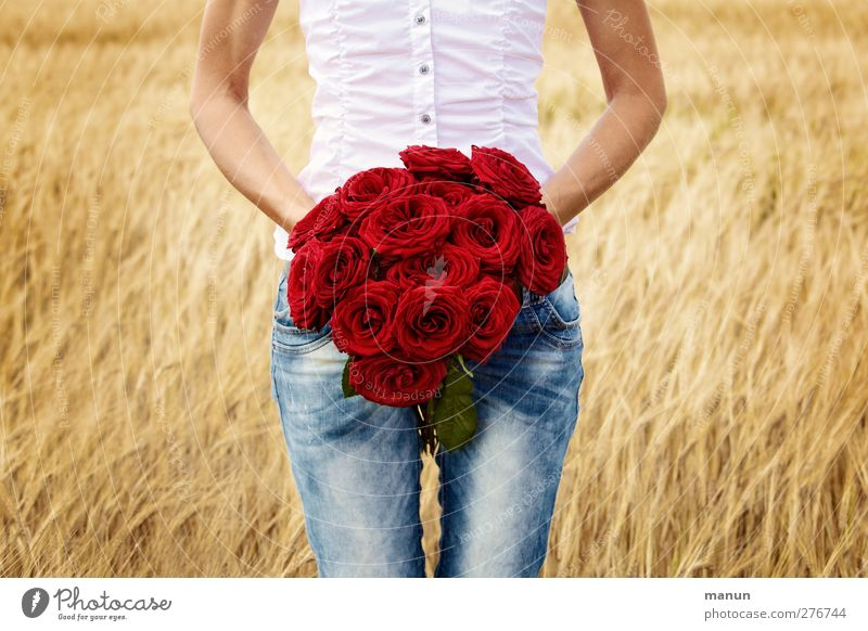 Red Roses Feasts & Celebrations Valentine's Day Mother's Day Birthday Human being Feminine Woman Adults Life Body Arm 1 Summer Field Sign Red rose Gold Emotions
