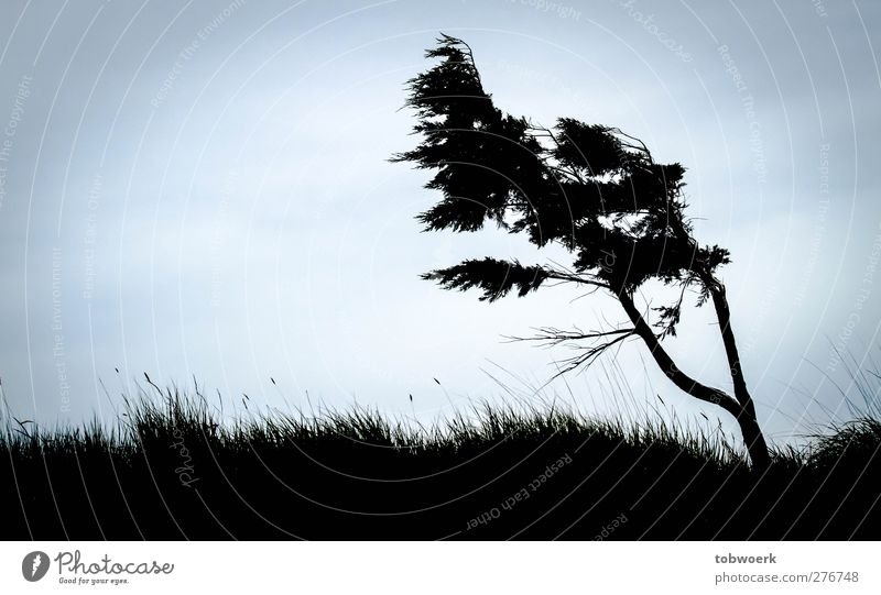 Sky Nature Blue Plant Tree Black Meadow Cold Grass Movement Moody Wind Power Growth Stand Esthetic