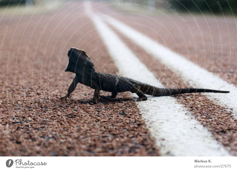 Loneliness Street Transport Reptiles Saurians Outback