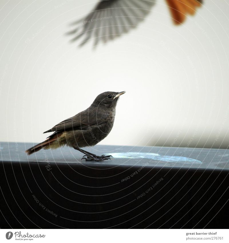 Hungry bird Animal Bird Wing 2 Baby animal Observe Discover Looking Wait Curiosity Cute Blue Gold Watchfulness Fly Flying Sit Colour photo Multicoloured