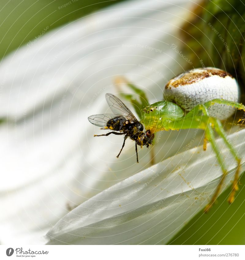 White Green Animal Meadow Spring Movement Small Blossom Natural Wild animal Fly Success Speed Strong Creepy Discover