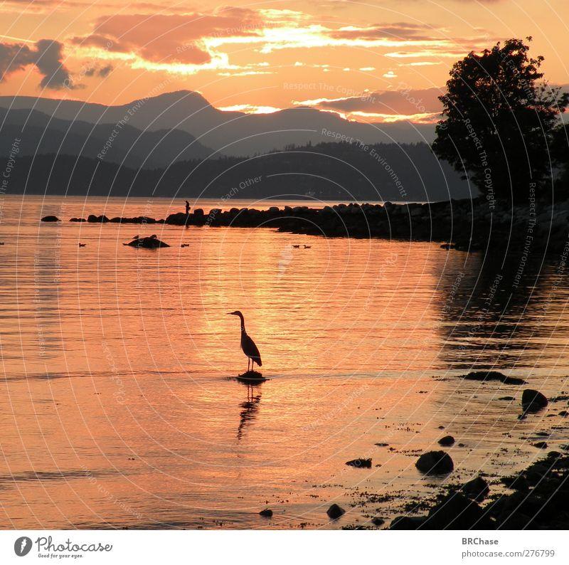 Sunset Heron Sky Nature Water Beautiful Tree Summer Ocean Joy Animal Clouds Black Landscape Mountain Coast Earth Bird