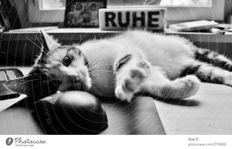 Cat Animal Power Keyboard Pet