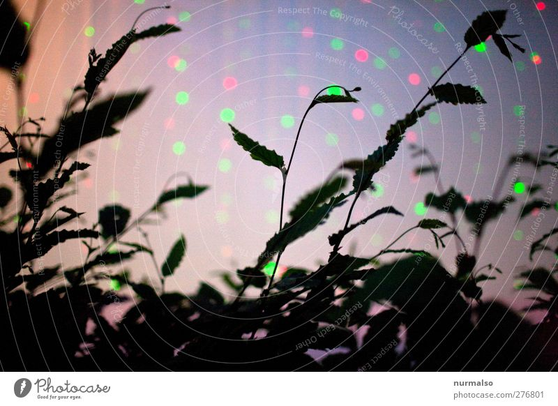 Nature Dark Movement Feasts & Celebrations Art Moody Dance Glittering Illuminate Esthetic Uniqueness Disco Club Event Ease Puzzle