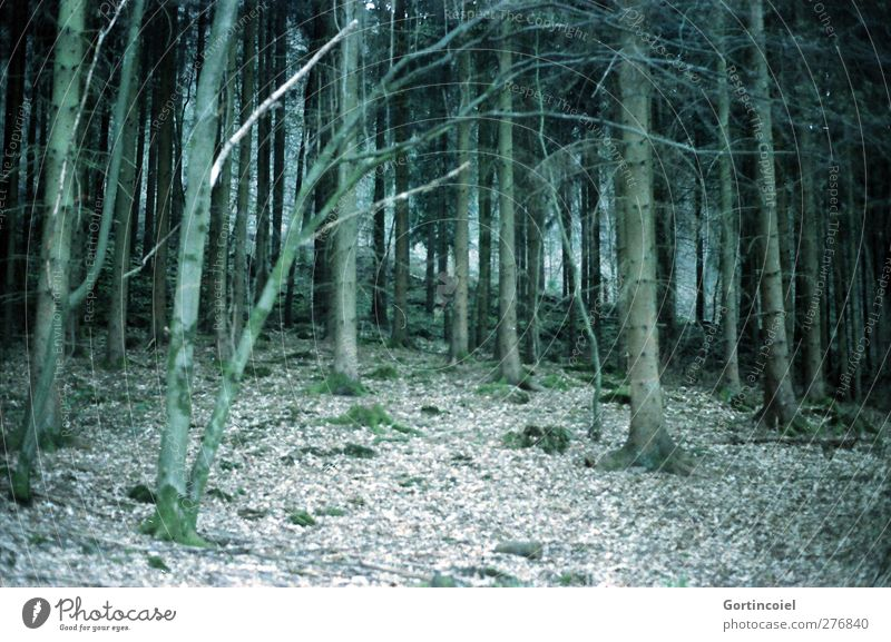 mixed forest Environment Nature Plant Tree Forest Dark Green Woodground Edge of the forest Coniferous trees Mixed forest Colour photo Subdued colour
