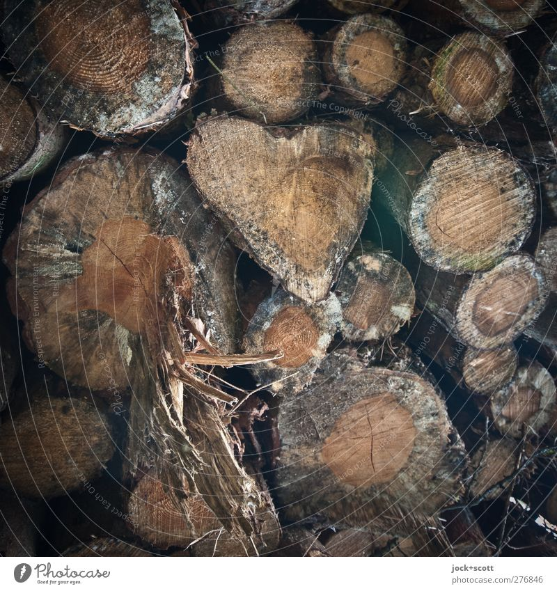 Nature Animal Natural Wood Happy Time Exceptional Brown Lie Growth Heart Circle Joie de vivre (Vitality) Cute Romance Tree trunk