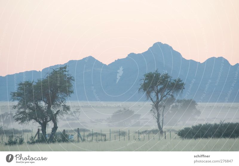 Good morning Namib Nature Landscape Cloudless sky Sunrise Sunset Fog Plant Tree Grass Kitsch Dawn Morning fog Haze Airplane takeoff Pastel tone Mountain